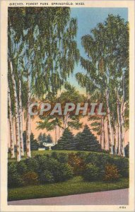 Old Postcard Birches Forest Park Springfield Mass