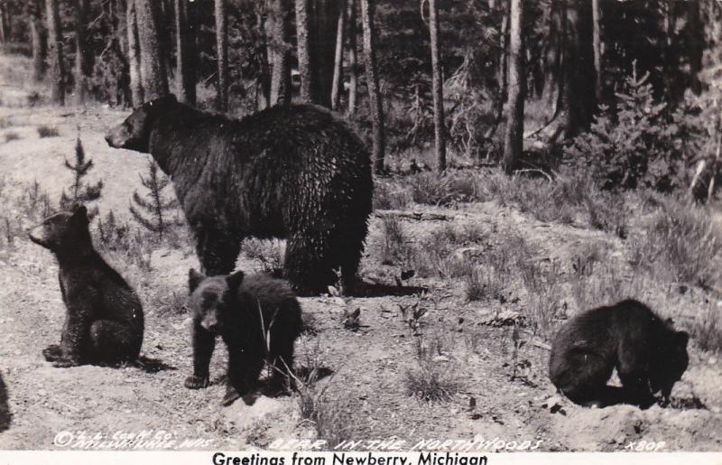 RP: Bears , NEWBERRY , Michigan , 30-40s