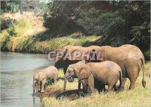 Modern Postcard The Elephant Loxodonta africana Savanna WWF