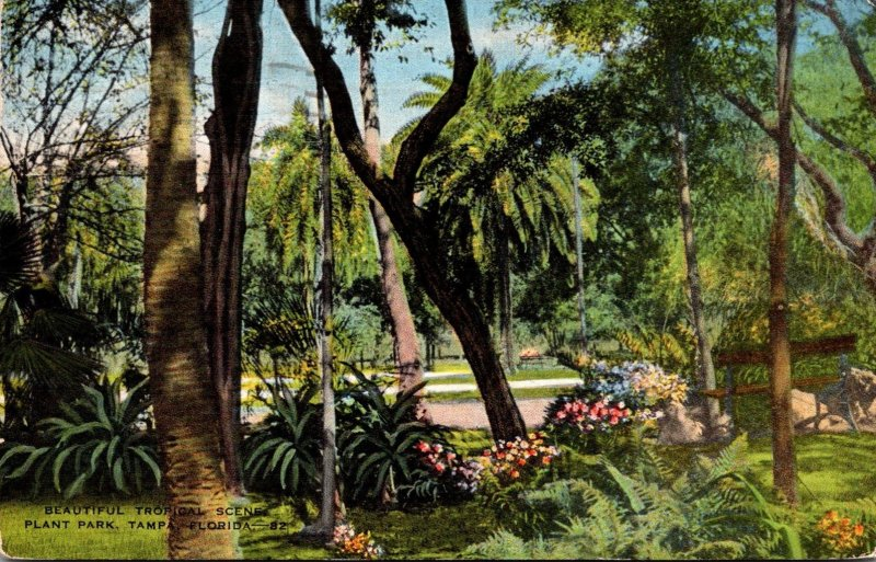 Florida Tampa Plant Park Beautiful Tropical Scene 1945