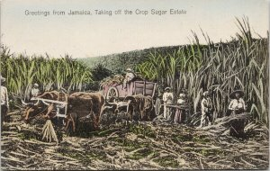 Greetings From Jamaica Taking Off Crop Sugar Estate Unused Duperly Postcard F19