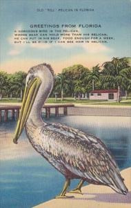 Florida Miami Old Bill Pelican In Florida Greetings From Florida