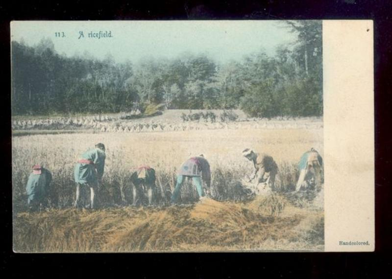 Early Hand-Colored Rotograph Postcard (#113) A Ricefield China B2874