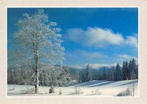 France L'Hiver en Franche Comte Ciel azur au Paradis Skie de Fond Postcard