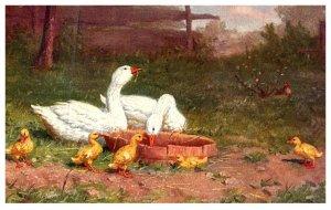 Bird ,  Ducks