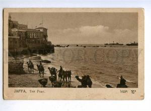192528 ISRAEL JAFFA port CAMEL Vintage jewish postcard