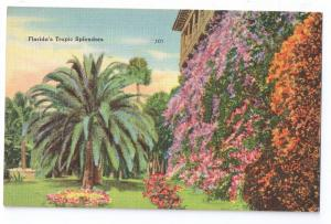 Floridas Tropic Splendors FL Vintage Tichnor Linen Postcard