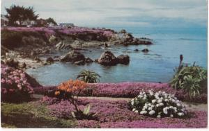 The Magic Carpet of red and pink ice plants on Ocean View Boulevard, CA