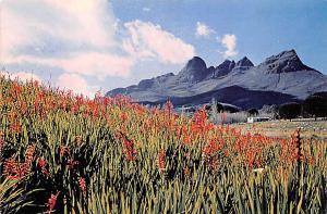 Cape Africa, Afrika Watsonia Helderberg, Somerset West Cape Watsonia Helderbe...