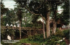Rustic Bridge at Birches near Fredericton New Brunswick NB Postcard D78 *As Is