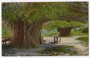 Bamboo Tree, Castleton Gardens, Jamaica