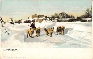 Stockholm Sweden Lapphundar dogs pulling sled snow scene antique pc Z15973
