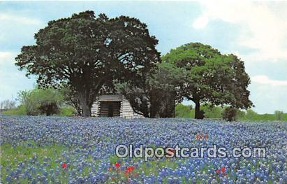 Stonewall, TX, USA Postcard Bluebonnetes, Lyndon B Johnson State Park