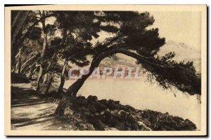 Postcard Old La Douce France French Riviera Menton Cap Martin Trail in the Pi...