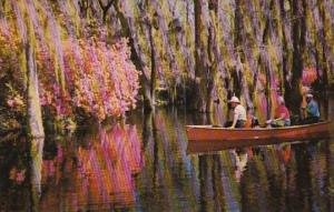 South Carolina Charleston Scene In Cypress Gardens