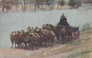 Ringling Bros. Circus , The Menagerie , Camel Team Wagon , 1908