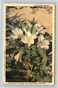 Palm Springs, CA-California, The Evening Primrose, Linen c1948 Postcard
