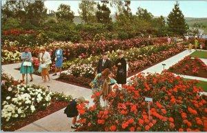 Pageant of Roses Garden Rose Hill Memorial Park Whittier California Postcard