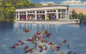 The Fish Play Football At Florida's Silver Springs Florida