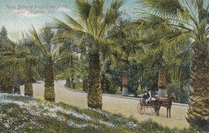 LOS ANGELES , California, 1900-10s ; Palm Drive , West Lake Park