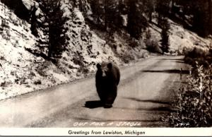 Michigan Greetings From Lewiston Bear Out For A Stroll Real Photo