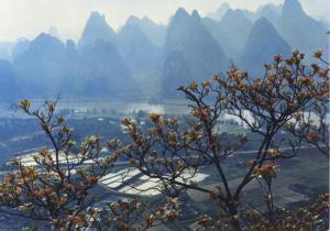 Yangsuo in Springtime ~ Guilin Landscape Guangxi Zhuang Postcard D4