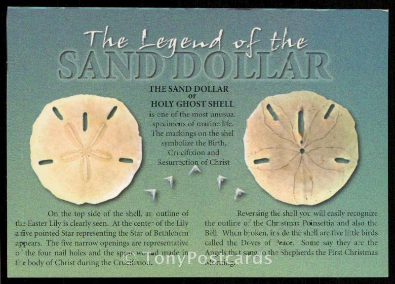 The Legend of the Sand Dollar or Holy Ghost Shell