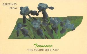 Tennessee~Iris Flowers on State Map Silhouette~The Volunteer State~1960 Postcard