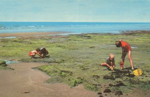 Building Sandcastles at Sunken Forest Borth 1970s Postcard
