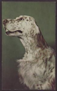 Greetings From Williamston,MI,Dog Postcard