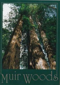 California Muir Woods These Beautiful Redwood Trees Grow To Over 200 Feet Tal...