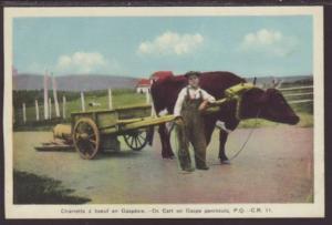 Ox Cart on Gaspe Penninsula,Quebec,Canada Postcard