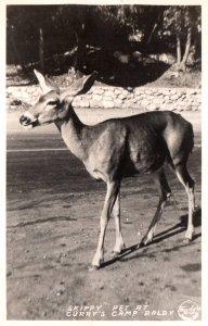 Deer,Pet at Currey's Camp Baldy BIN
