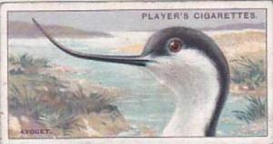 Player Cigarette Card Curious Beaks No 2 Avocet