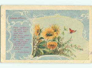c1910 Language Of Flowers signed BUTTERFLY APPROACHES SUNFLOWERS AC4997