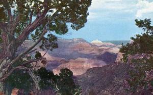 AZ - Grand Canyon National Park, Juniper Tree