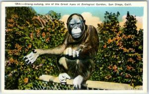 1920s San Diego Zoo California Postcard Orang-outang, One of the Great Apes