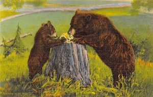 Learing Table Manners Rocky Mountains, CO, USA Bear Unused