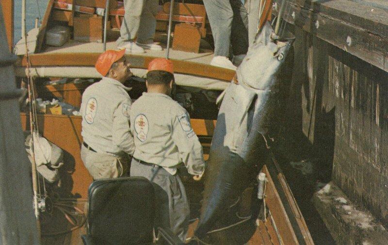 NARRAGANSETT , Rhode Island , 50-60s ; Tuna