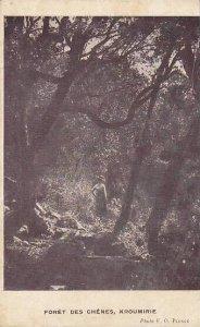 Tunisia Kroumirie Foret des Chenes 1917