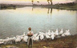 german postcardLady taking care of ducks in  lake Old vintage antique