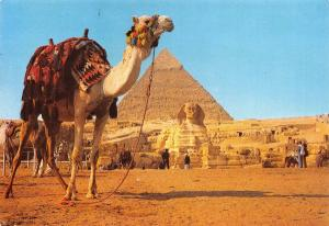 Vintage Postcard, Camel at Giza, The Great Sphinx & Pyramid of Kephre, Egypt #E
