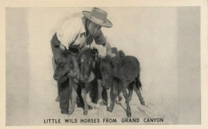 GRAND CANYON , Arizona , 1950-60s ; Little Horses