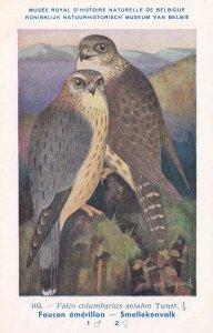Merlin Falco Columbarius WW2 Antique Bird Postcard