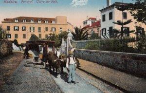 MADEIRA, Portugal, 1900-1910s; Funchal. Carro de bois