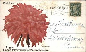 West Grove PA Chrysanthemum Flower Advertising Postcard c1910