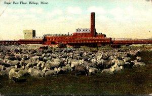 Montana Billings Sugar Beet Plant 1910