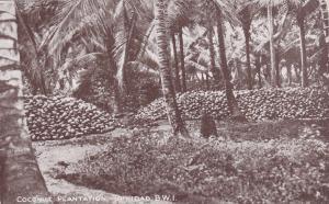 TRINIDAD , B. W. I. , 00-10s ; Coconut Plantation