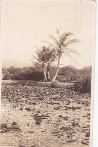 RP: HONOLULU , Hawaii , 1920 ; Pond
