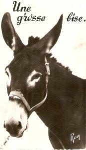 Donkey. Une grosse bise  Old vintage French postcard